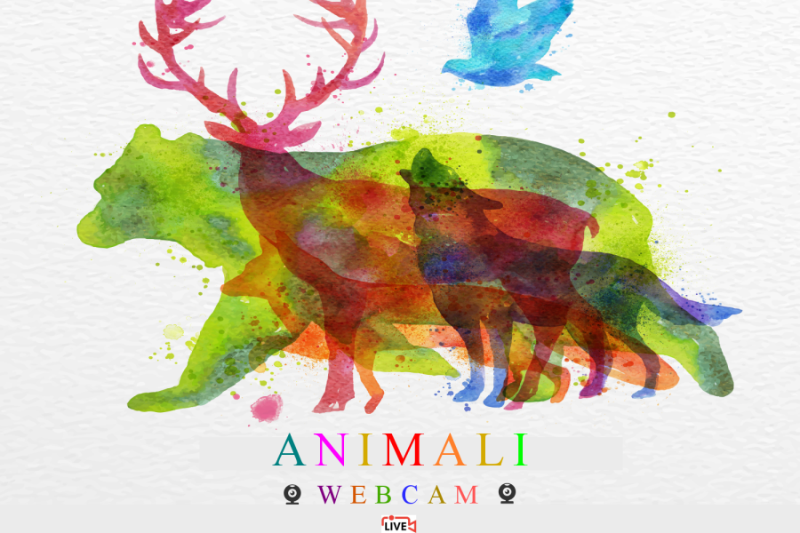 Webcam animali live